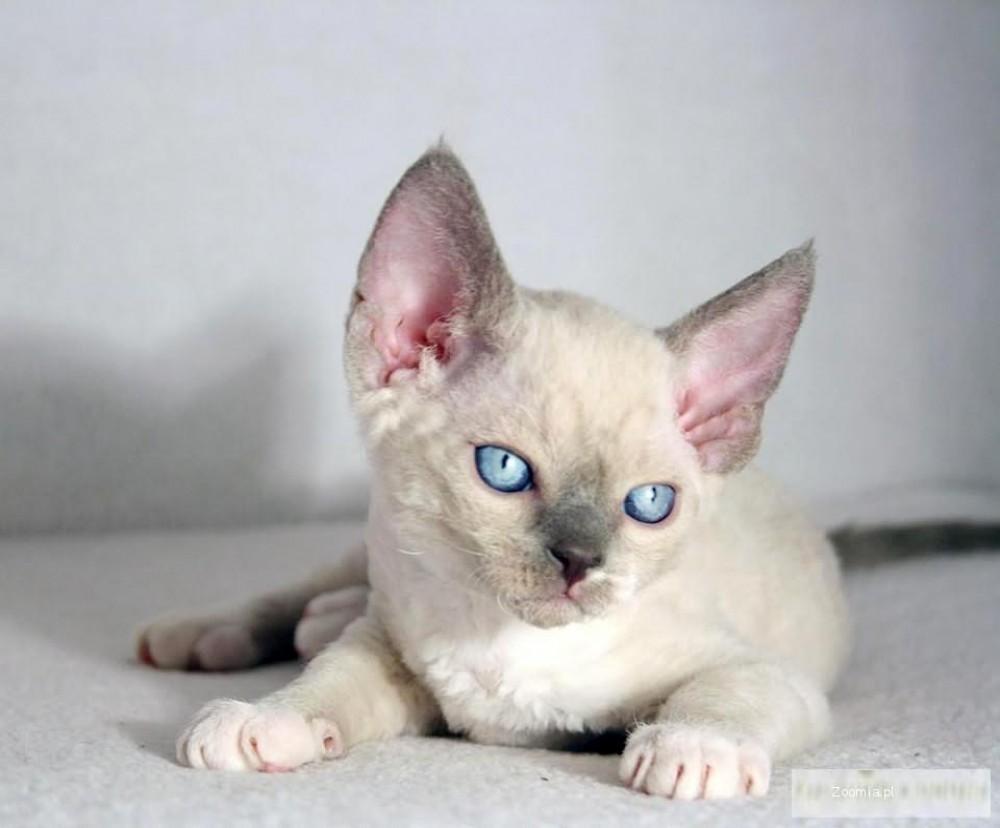 Źródłó zdjęcia: ciekawyblogokotach.blogspot.com/