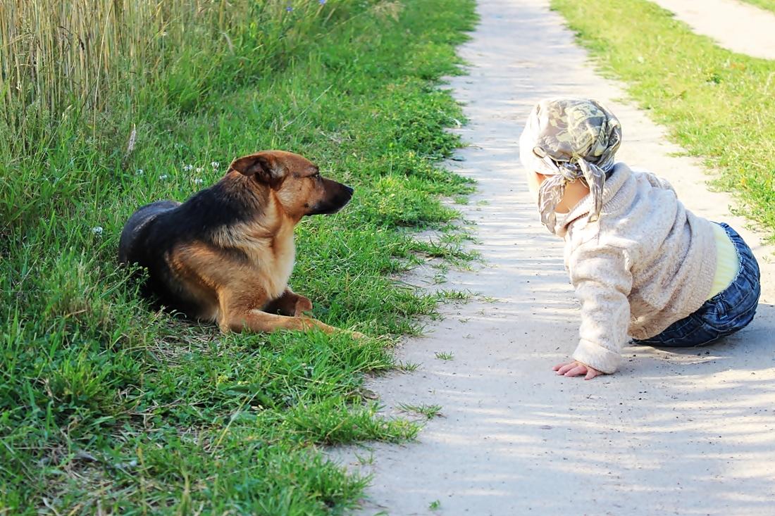 Pies dobry przyjaciel dla dziecka i  obowiązek dla rodzica