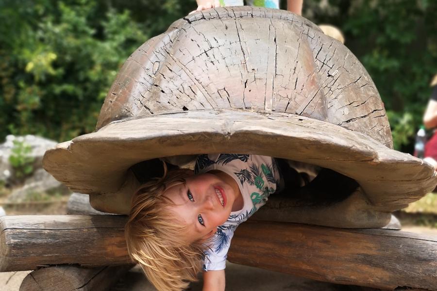 odlew żółwia do których się można schować