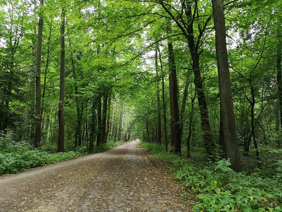 Las Łagiewnicki w Łodzi, zalesienie
