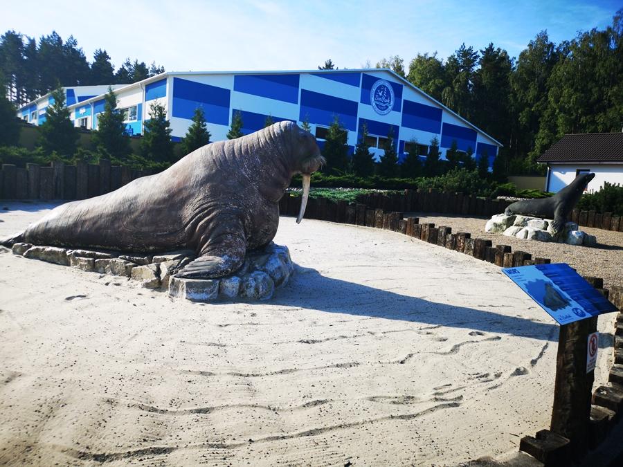 SeaPark Sarbsk - Największe fokarium w Polsce! Czy warto się wybrać?