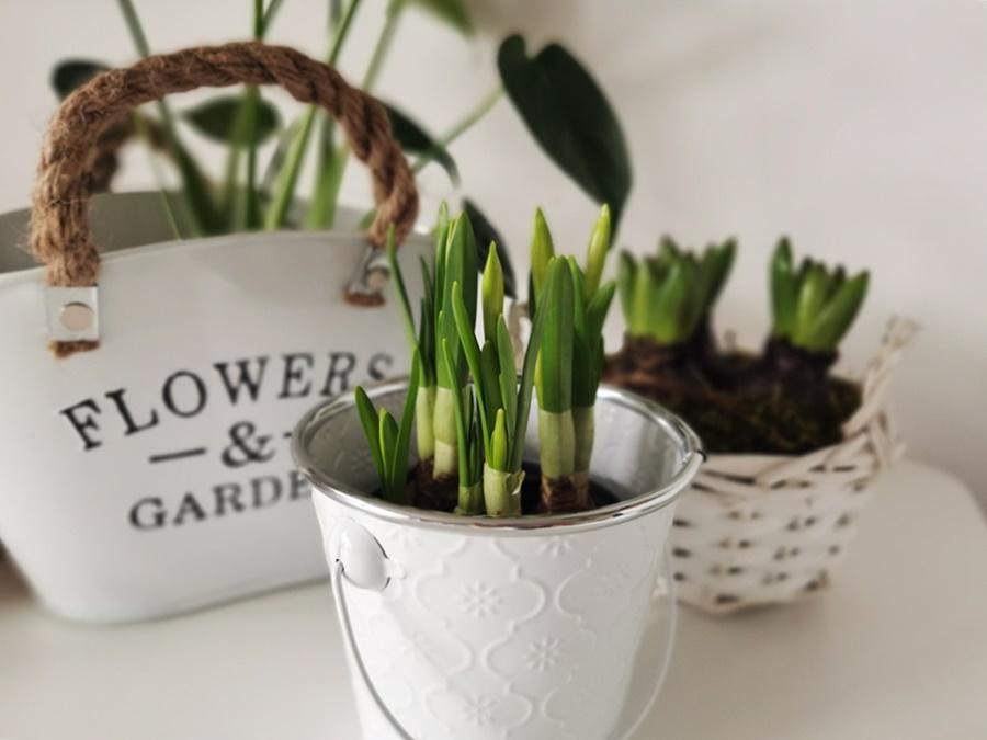 wiosenne kwiaty do domu